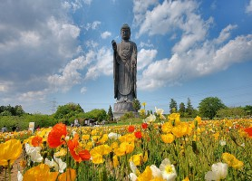 Ushiku Daibutsu: la plus haute statue de bronze du monde