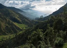 Vallée de Cocora : des palmiers dans la montagne