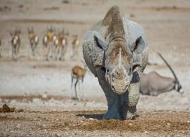 Parc national d'Etosha: un lieu de découvertes fabuleuses