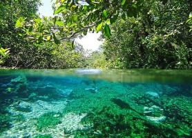 Bonito: des eaux aussi pures que le cristal