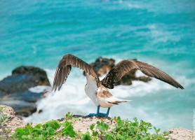 Isla de la plata: la passionnante île du Pacifique