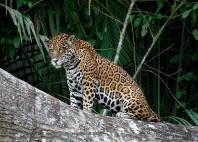 Parc national de Manú