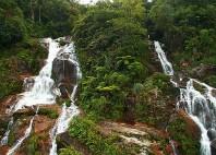 Parc de Podocarpus