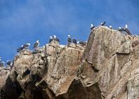 îles Ballestas
