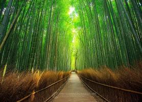 Arashiyama: la plus attractive aire de Kyoto