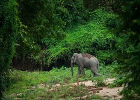Huai Kha Khaeng: un paradis sauvage sur terre