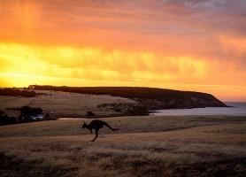 Kangaroo Island: le paradis australien!