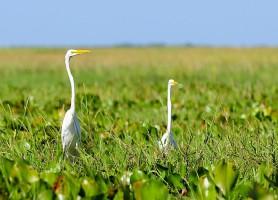 Les Llanos: les magnifiques plaines aux multiples ressources