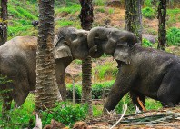 Parc national Gunung Leuser