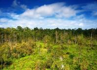Parc national Tanjung Puting