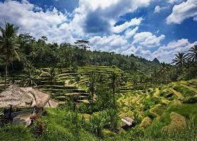 Rizières de Tegalalang: des terrasses en cascades!