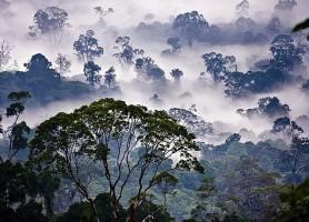 Vallée de Danum: découvrez une nature inhabituelle
