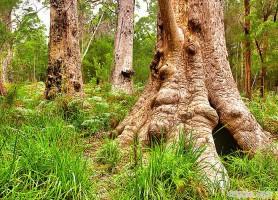 Vallée des géants: les époustouflants arbres du bonheur