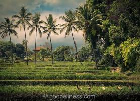 Village Mayong: découvrez ce paradis caché!