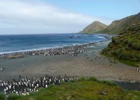 Île Macquarie: un grain de miracle sur l'océan Austral