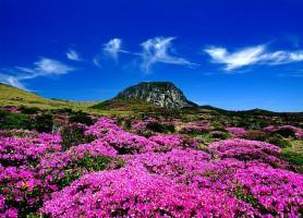 Île de Jeju: la scintillante île aux mille trésors
