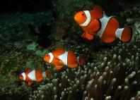 Îles Raja Ampat