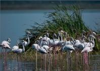 Parc national Bundala