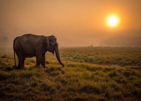 Parc national Chitwan: l'éblouissant refuge animalier