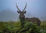 Parc national Horton Plains