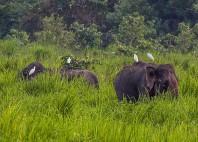 Parc national Kaziranga