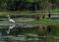 Parc national Keoladeo