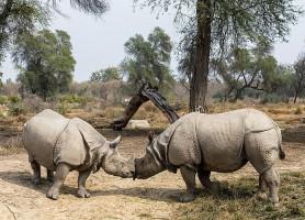 Parc national Lal Suhanra: une enceinte de rêve