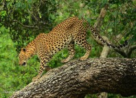 Parc national Yala