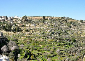 Battir: découvrez ce hameau espoir de tout un peuple