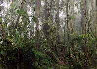 Parc national de Darién
