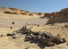 Vallée des baleines: l'incontournable trésor égyptien!