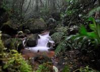 Parc national La Tigra