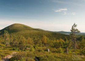Parc national de Pallas-Yllästunturi : une réserve naturelle unique