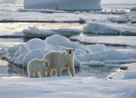 Svalbard: découvrez cet archipel aux mille attraits