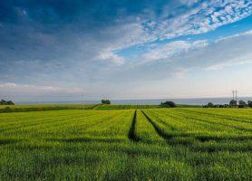 Île d'Ærø: une escale au cœur du futur Danemark
