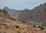 Djebel Sirwa