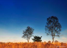 Parc national De Hoge Veluwe: un site paradisiaque