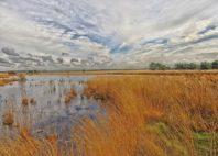 Parc national De Hoge Veluwe
