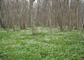 Abruka: la sublime île à la forêt de feuillus