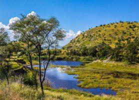 Daan Viljoen: au cœur d'une rayonnante réserve