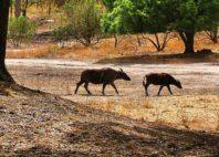 Fathala Reserve