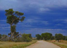 Kgalagadi: au cœur d'une luxuriante et sauvage nature