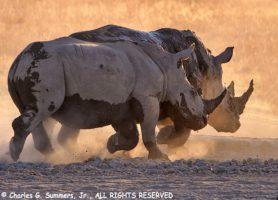 Khama Rhino Sanctuary: une escapade formidable