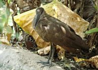 Kuimba Shiri Bird Park