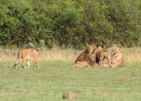 Kyambura Game Reserve