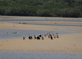Lagune de la Somone: l'eldorado des vacanciers