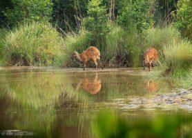 Réserve de Lesio Louna: un magnifique parc africain