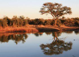 Madikwe Game Reserve: un véritable parc de rêve
