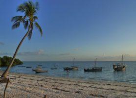 Île de Mafia: découvrez la magnificence de cette île