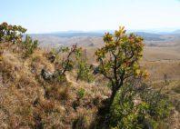 Mont Nyangani